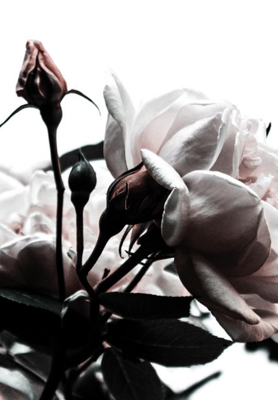 Blossom Rose Flower Artwork Picture 1